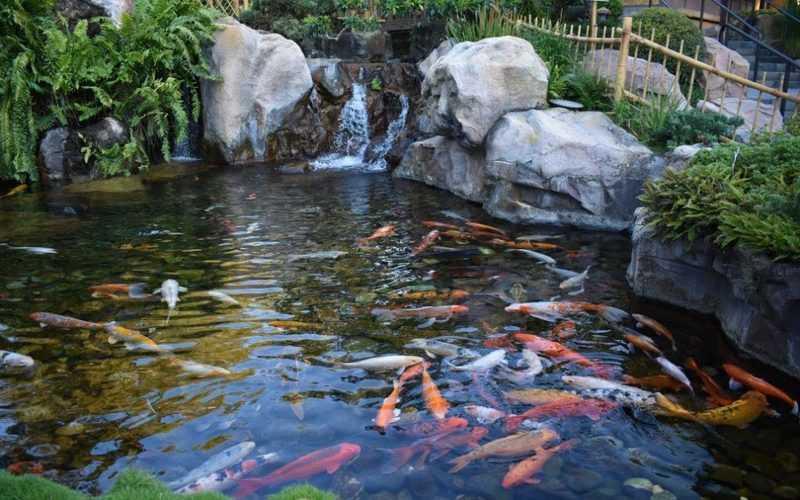 Hồ cá koi đồng nai