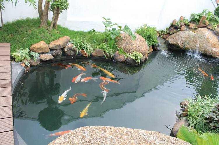 hồ cá koi long an