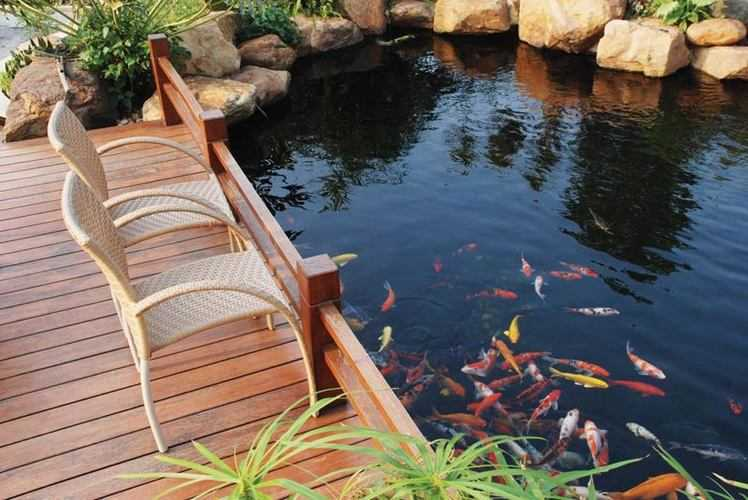 hồ cá koi tiền giang