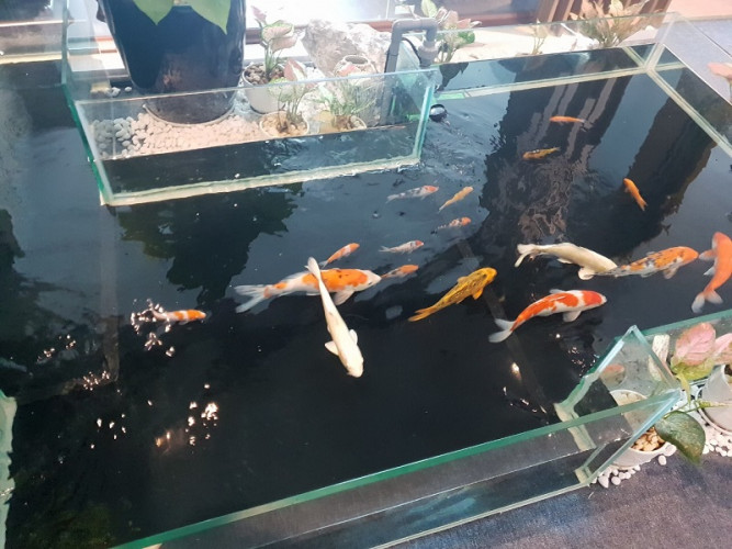 hồ cá koi bằng kính