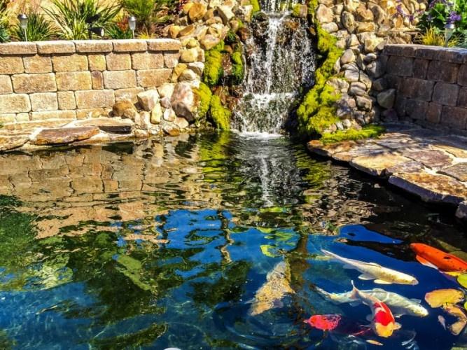 hồ cá koi mini góc sân