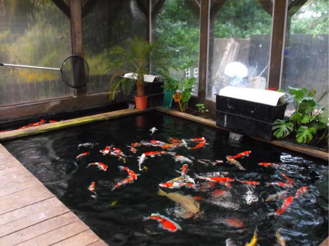 Hồ cá koi trong nhà